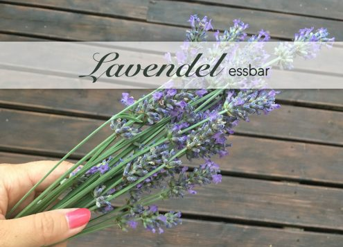 Lavendel essbar für Tees und Sirup und Gerichte. Nicht zu verwechseln mit Lavandin.