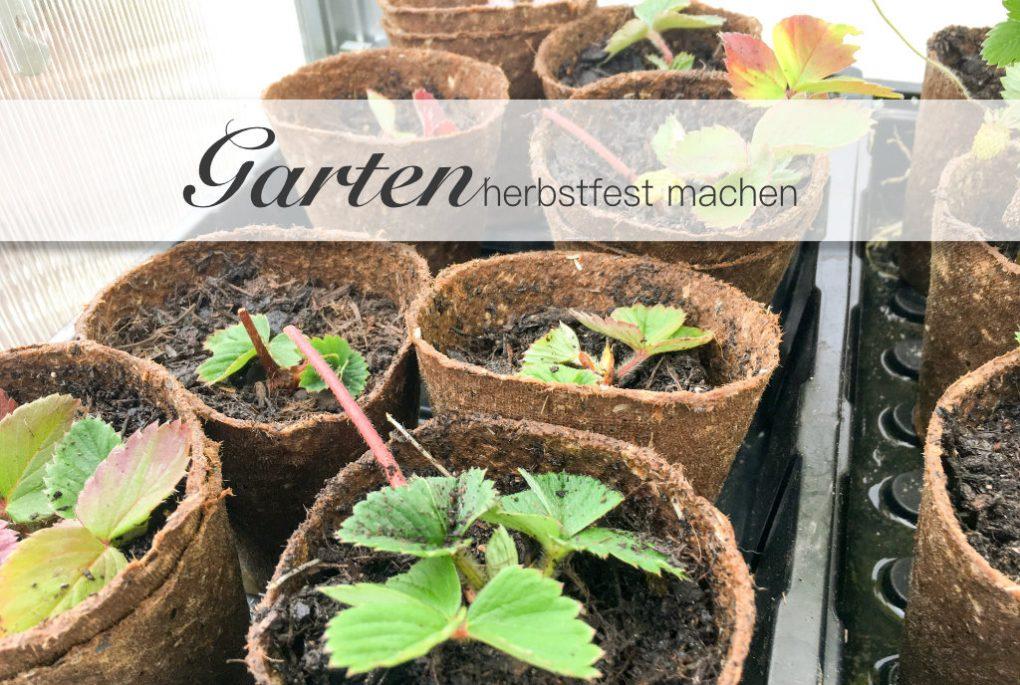 Garten herbstfest machen. Garten auf den Herbst und Winter vorbereiten.