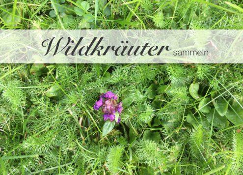 Wildkräuter sammeln in Sindelfingen mit Expertin