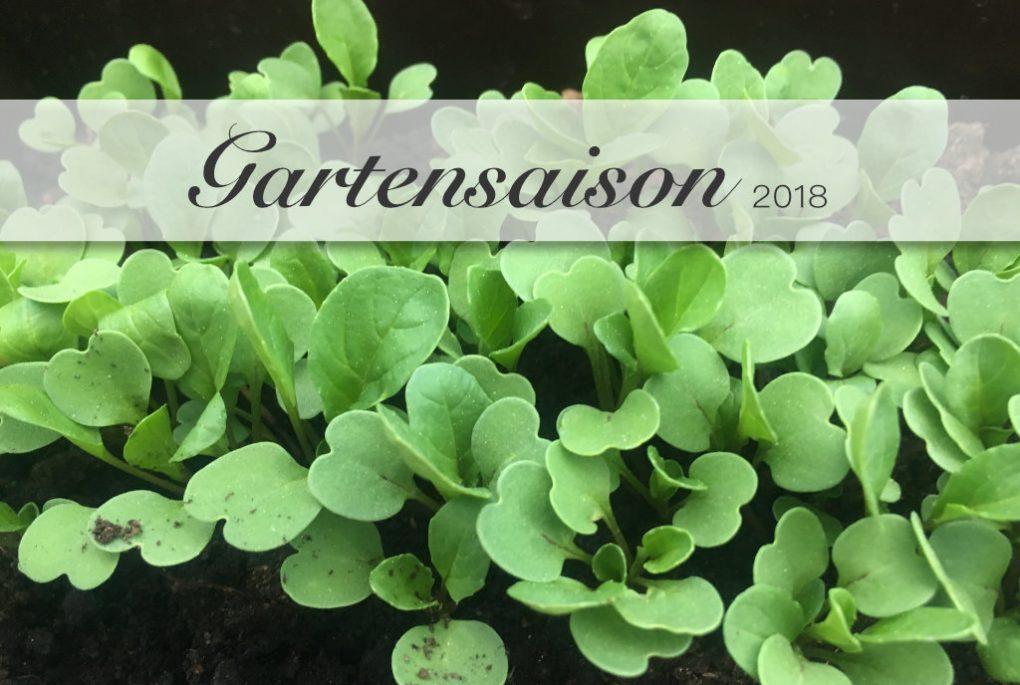 Gartensaison 2018 angepflanzt und samenfest - alte Tomaten